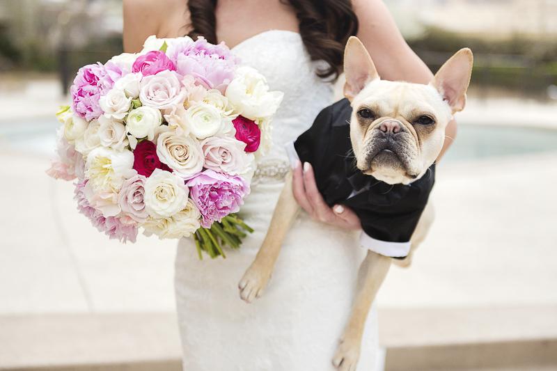 Best (Wedding) Dog: Riggins the French Bulldog - Daily Dog Tag