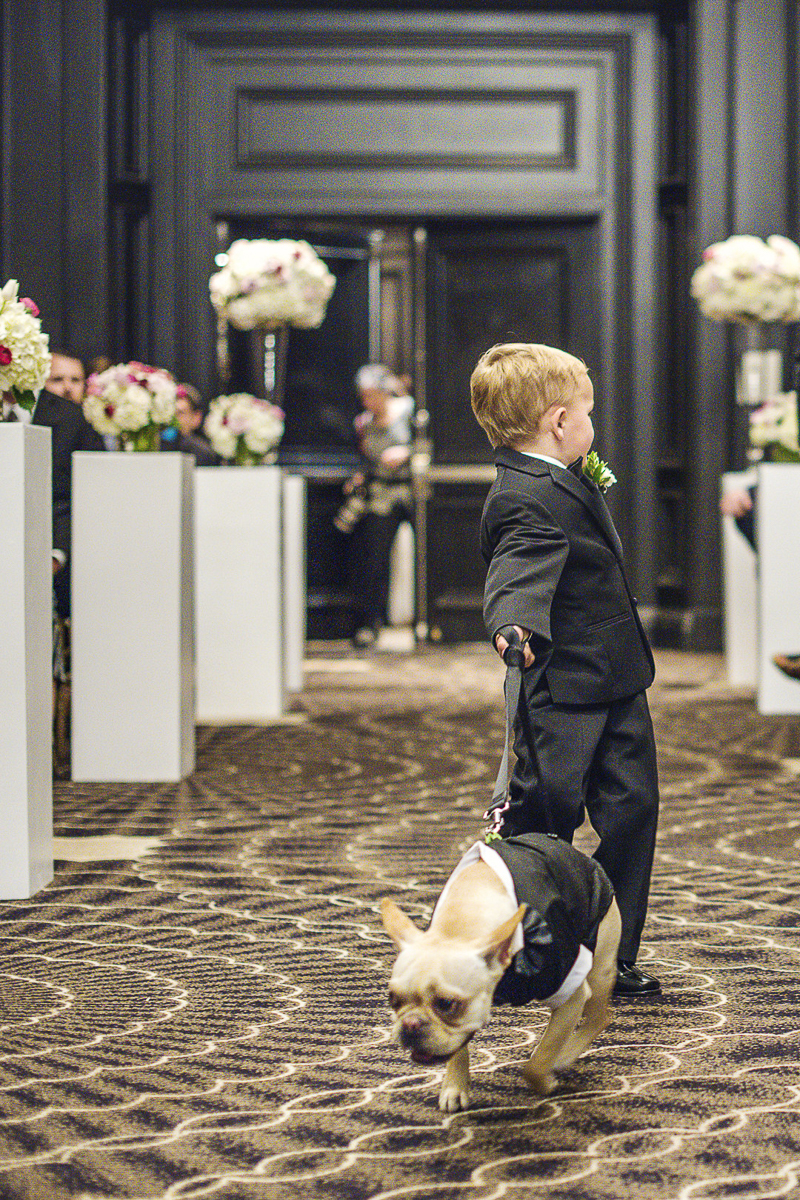 Frenchie pulling little boy down the aisle, wedding dog, ©epagaFoto | dog-friendly wedding