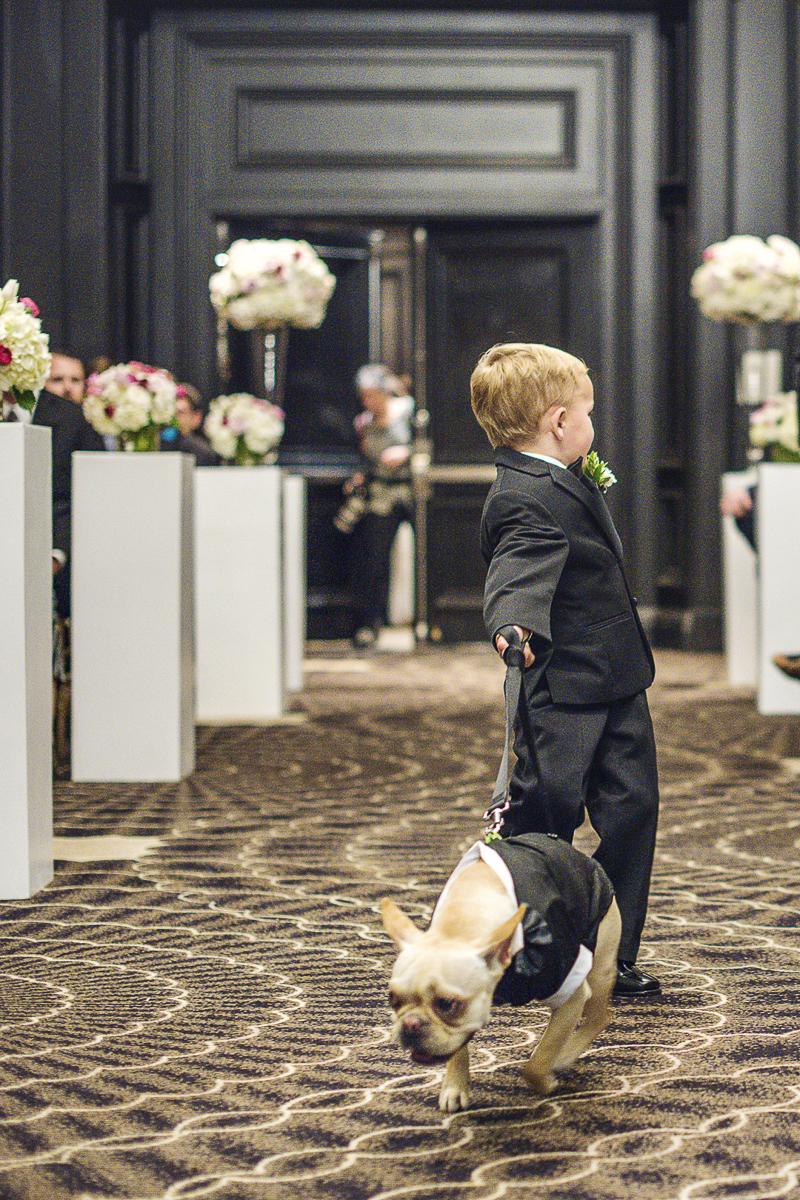 Frenchie pulling little boy down the aisle, wedding dog, ©epagaFoto | dog-friendly wedding