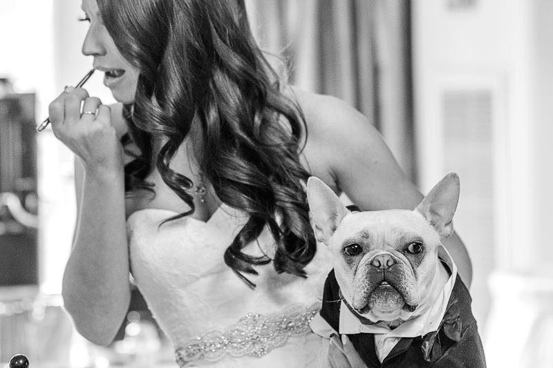 bride touching up makeup while holding her dog, Frenchie, ©epagaFoto | Kansas City, MO dog-friendly wedding