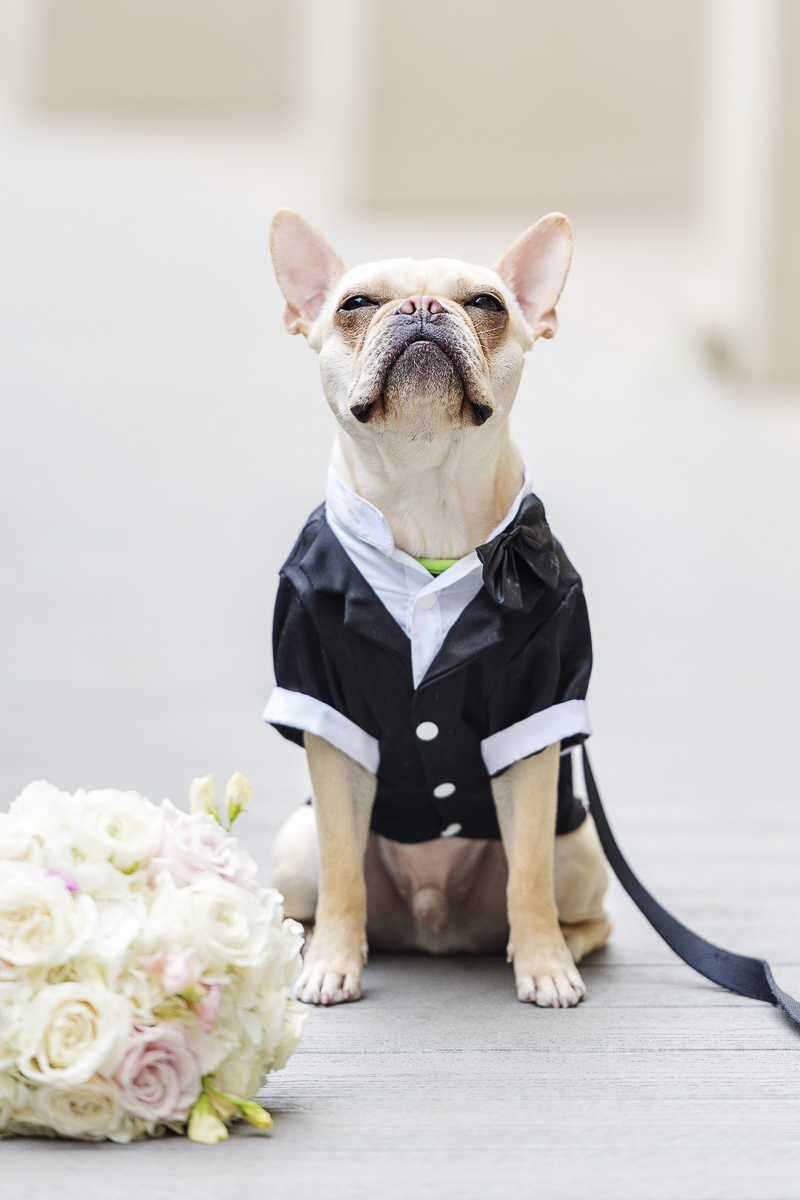 French Bulldog wearing tux, sitting next to bouquet, wedding dog ©epagaFoto | Kansas City, MO dog-friendly wedding