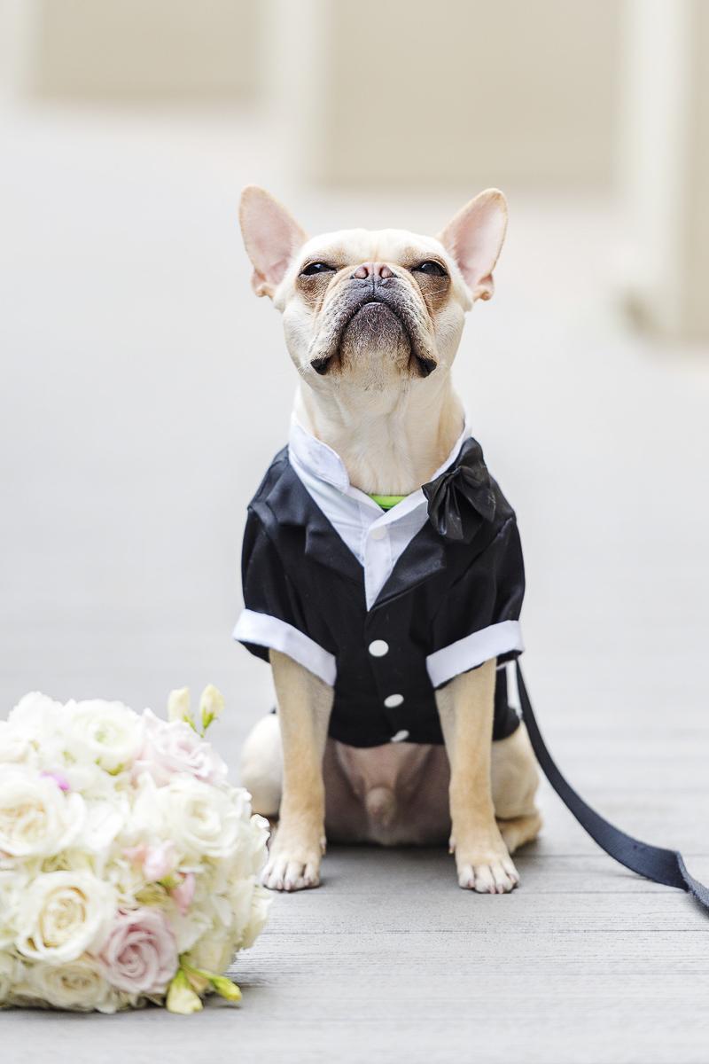 French Bulldog wearing tux, sitting next to bouquet, wedding dog ©epagaFoto | Kansas City, MO dog-friendly wedding