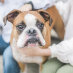 Engaging Tails:  Axel the Boxer