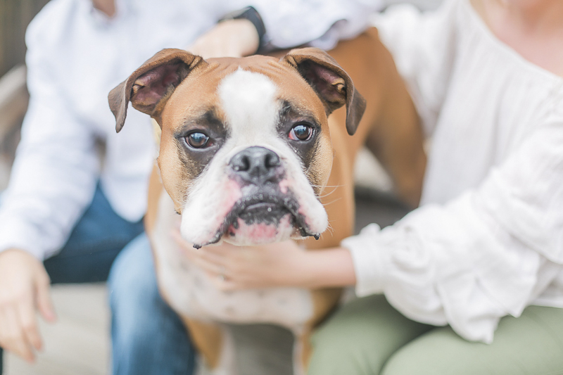 Boxer, dog-friendly engagement photos in Charlotte, NC ©Casey Hendrickson Photography