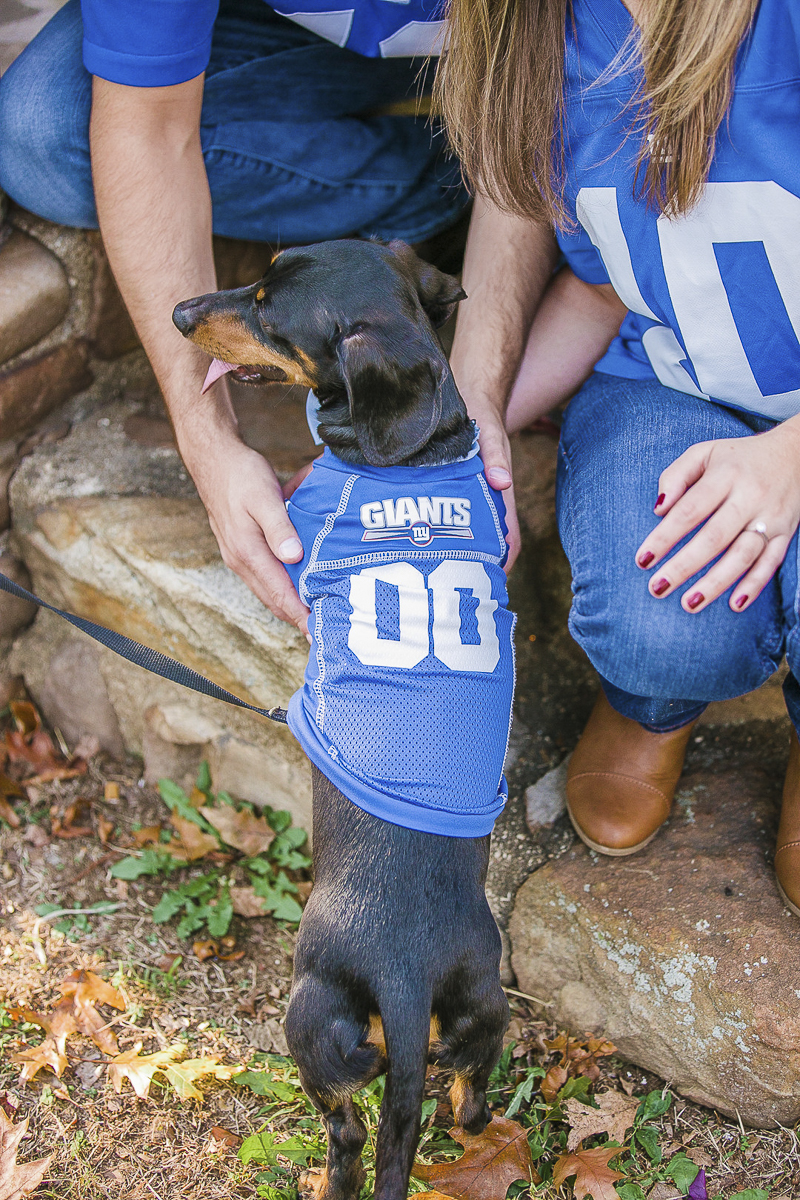 Doxie wearing Giants Jersey