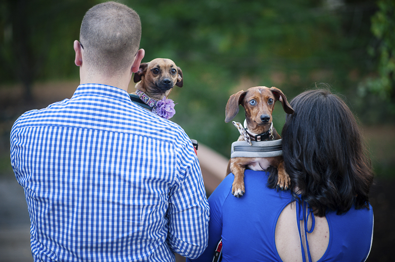 dogs looking over their humans shoulders, creative pet photography ideas, Maryland lifestyle dog photographer ©Nina K Photography