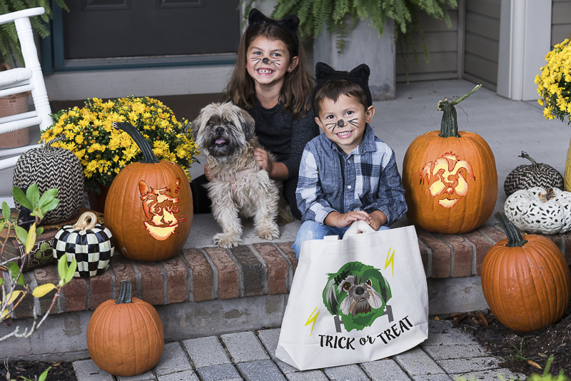 Howl-O-Ween, custom pumpkin stencils and treat bags for pet lovers, ©Alice G Patterson Photography | CNY lifestyle photography for small businesses