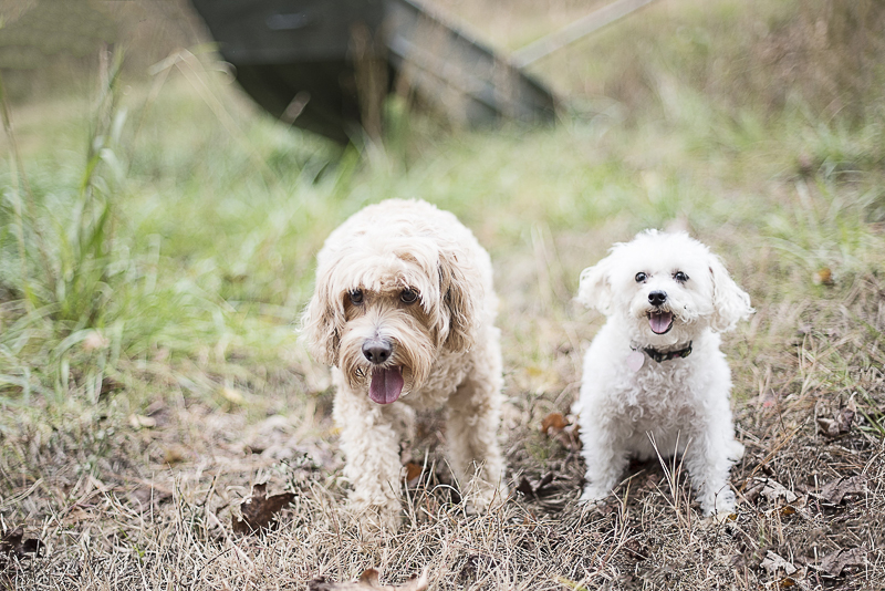 Mixed breeds on a farm, lifestyle dog photography, ©Alicia Hite Photography