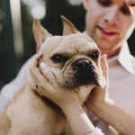 Engaging Tails:  Chip the Frenchie in Kansas City