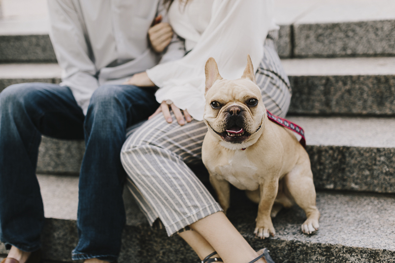 fawn Frenchie, dog friendly engagement session | ©Alyssa Barletter Photography