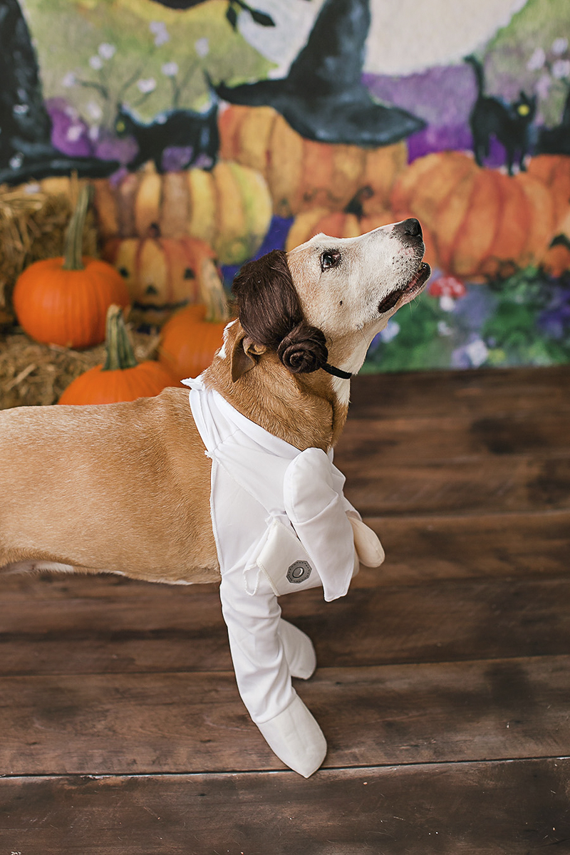 dog wearing Princess Leia Halloween costume | Philadelphia pet photographer, April Ziegler Photography