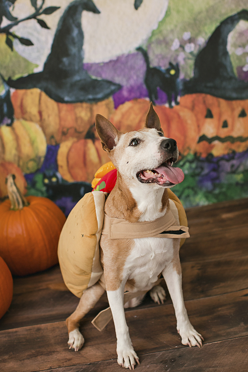 Philadelphia pet photographer, April Ziegler Photography
