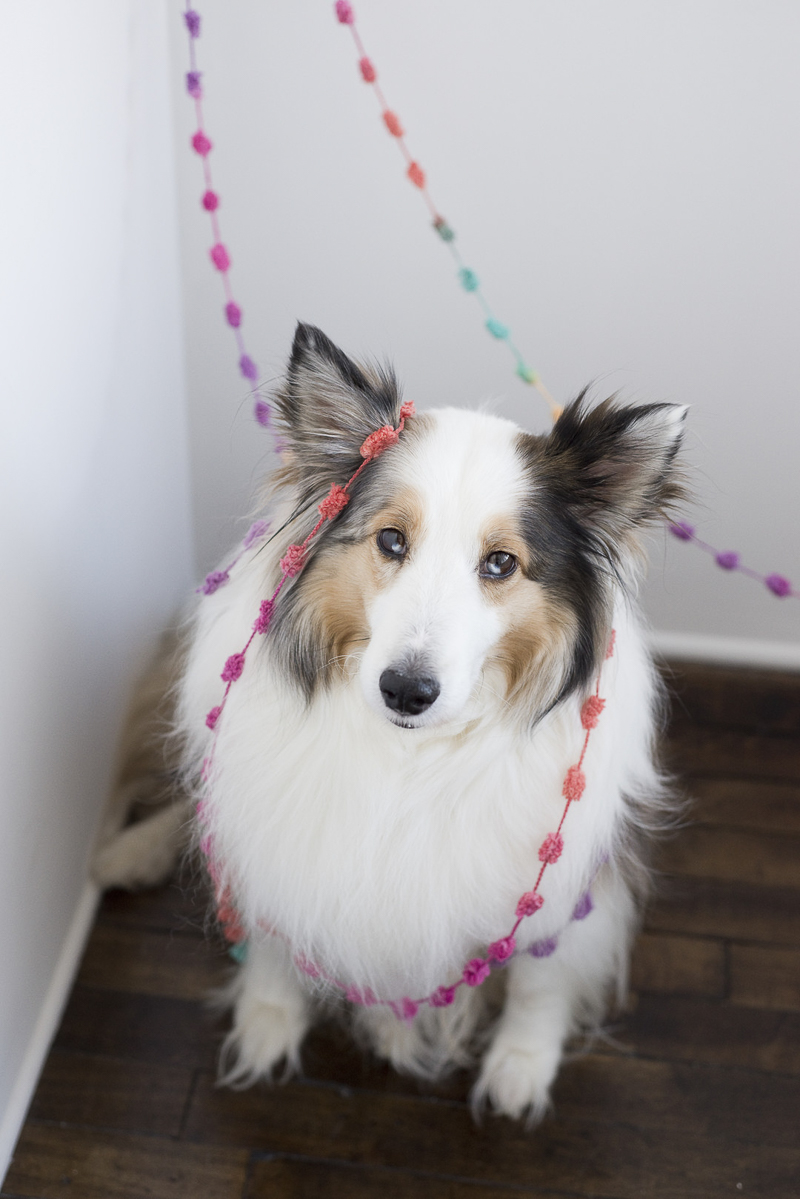 birthday celebration for dog, ©Ashley Lynn Photography