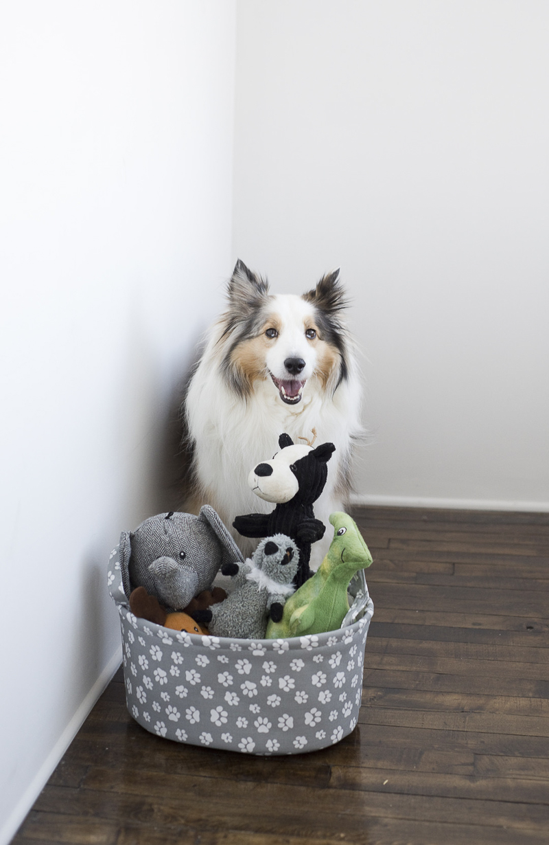 Dog and her basket of stuffed toys, ©Ashley Lynn Photography