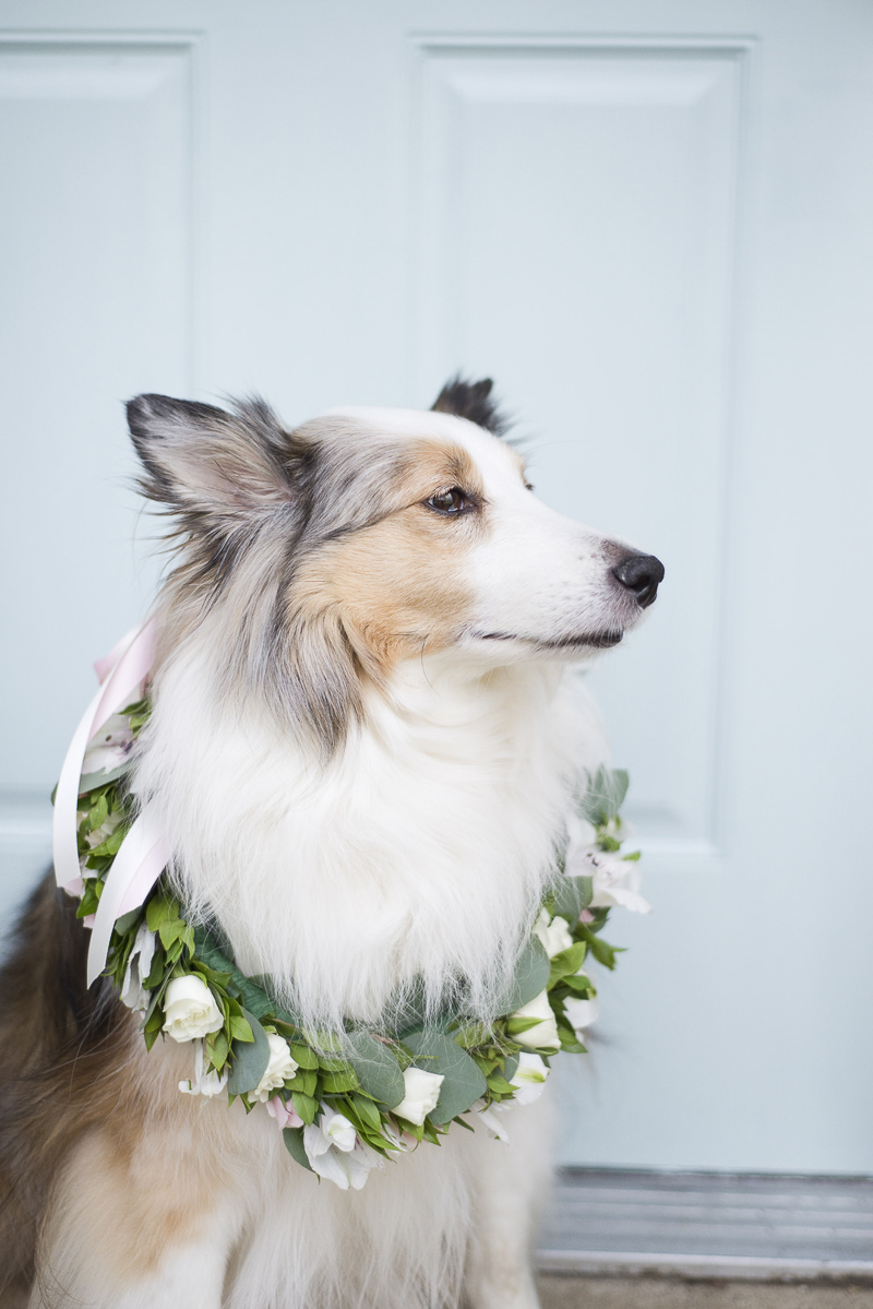 lovely dog, Sheltie wearing floral wreath, ©Ashley Lynn Photography