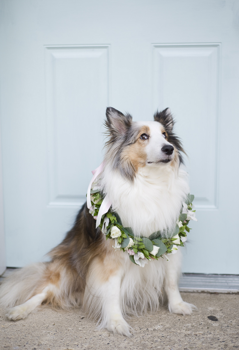 beautiful dog wearing floral wreath in front of blue door, lifestyle dog photography, ©Ashley Lynn Photography