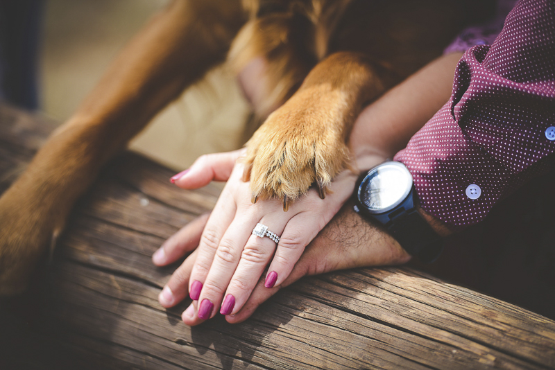 hands and paws, engagement photos with dog | ©CR Photography | Dog-friendly engagement photos