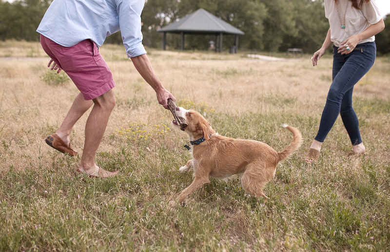 man playing tug with small dog, | Colorado dog-friendly engagement session, ©Good Morrow Photography