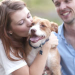 Engaging Tails:  Merlin the Jack Russell Terrier Mix