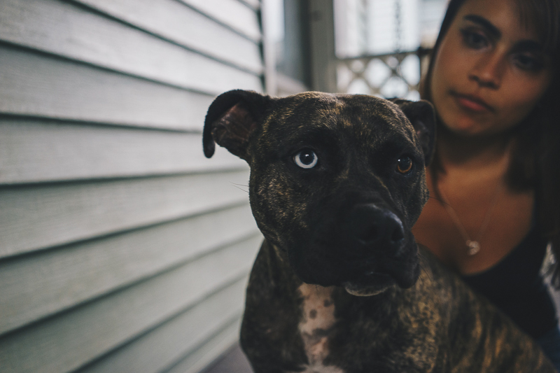 Pit bull mix with one blue eye and one brown eye, dogs are family | ©Heck Designs and Photography