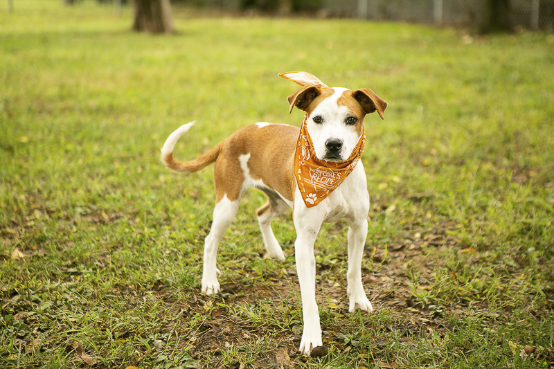 Young adoptable dog, photographer helping rescue dogs | PAWS, Rutherford, TN ©Mandy Whitney Photography