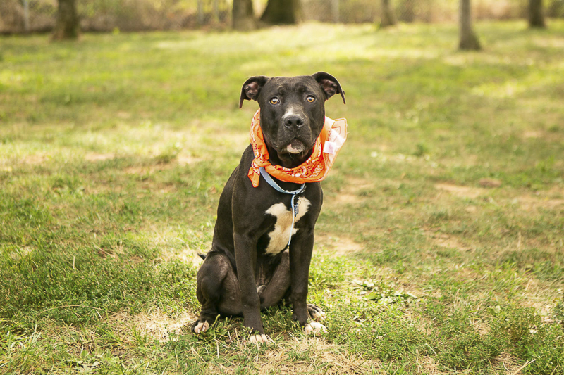 saving lives through photography | Nashville pet photography Mandy Whitley
