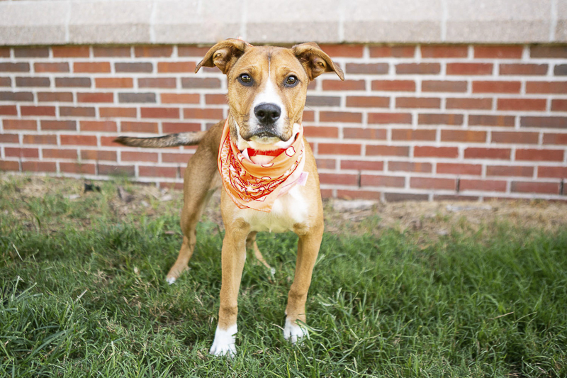 Nashville pet photographer Mandy Whitley helps shelter dogs with great adoption photos