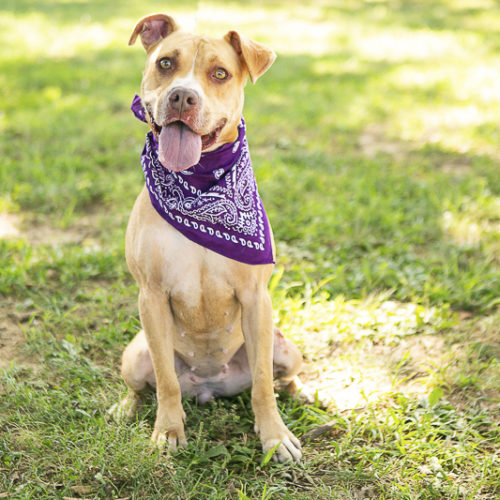Adopt Me:  Rutherford County PAWS