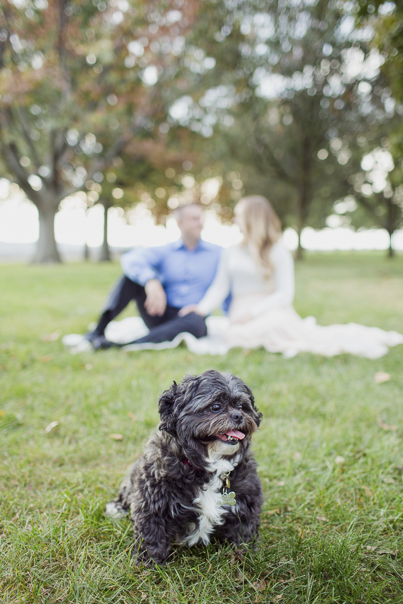 Dog-friendly engagement pictures, ©Meely Photography, NJ pet photography