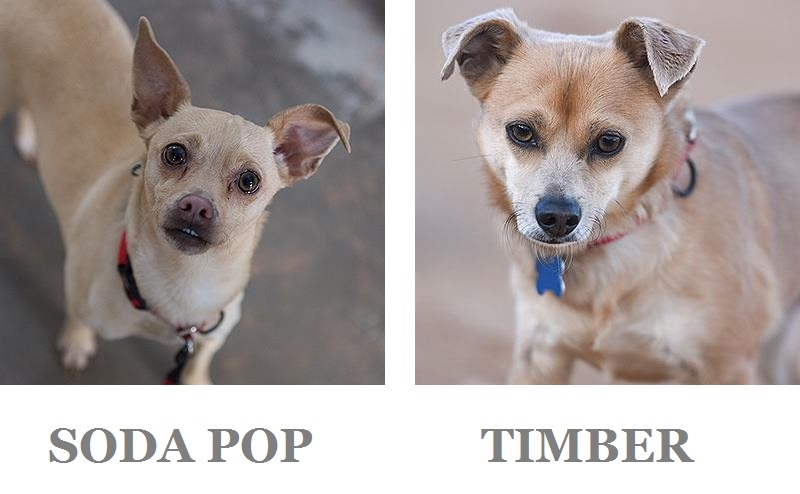 rescue dog adoption tips, Best Friends Animal Sanctuary, Kanab, Utah