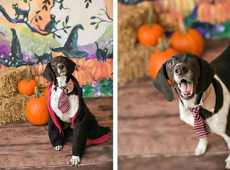April Ziegler Photography- Howl-O-Ween dog wearing Harry Potter costume