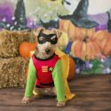 April Ziegler Photography- Howl-O-Ween dog wearing Robin costume