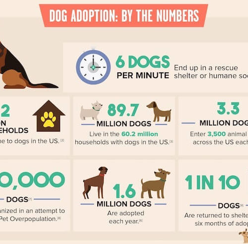 3 Lessons About Dog Adoption From A Shelter Volunteer