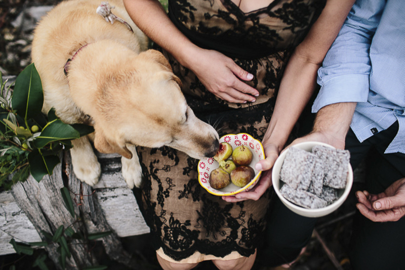 curious Lab sneaks a taste of food during engagement session, ©Hilary Cam Photography, creative ways to include dogs in engagement photos
