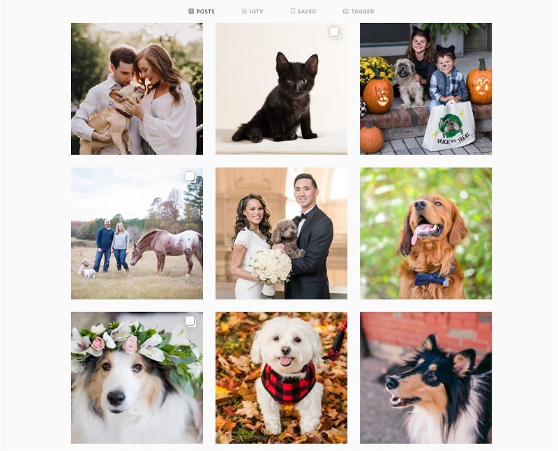Daily Dog Tag Instagram-Tailwind scheduler