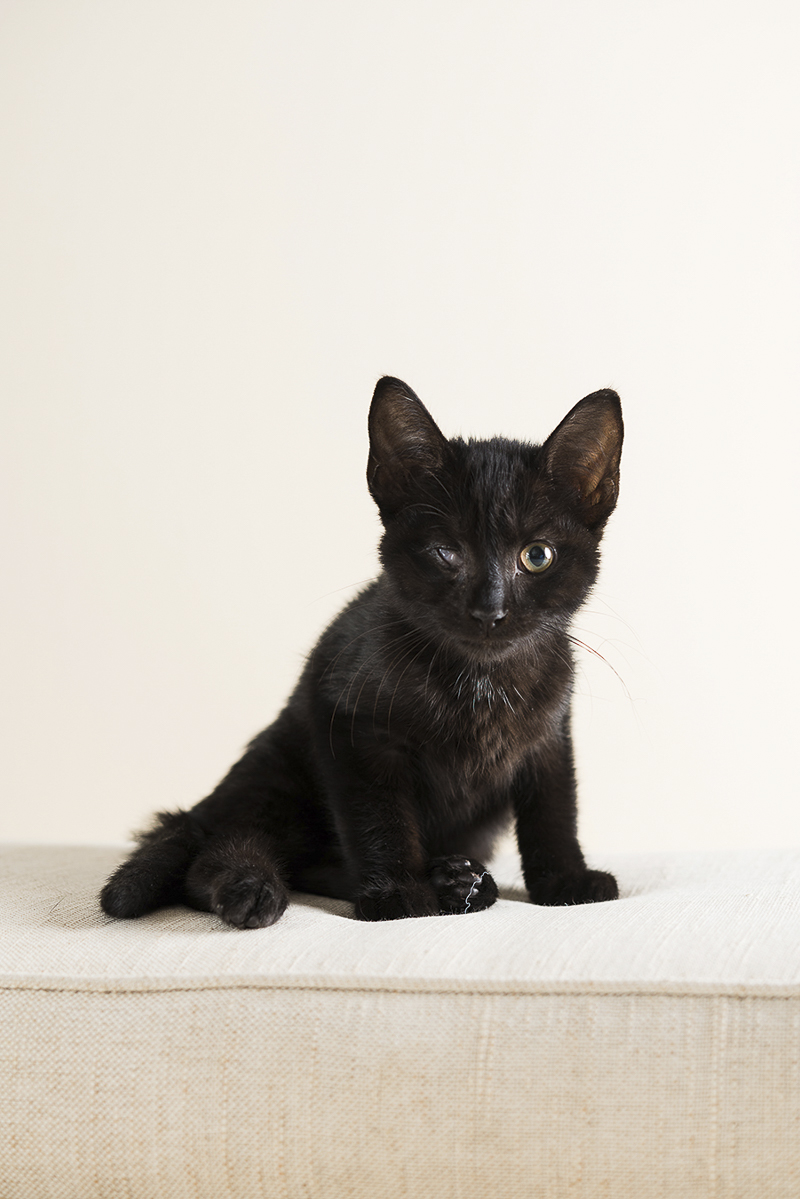 Little Highway Kitty, black kitten on white sofa, ©Alice G Patterson Photography | Syracuse lifestyle & studio pet photography