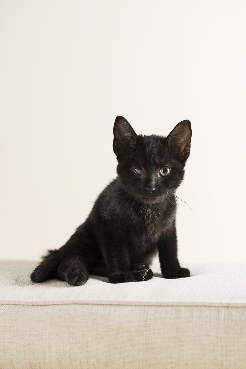 Little Highway Kitty, black kitten on white sofa, ©Alice G Patterson Photography | Syracuse lifestyle & studio pet photography
