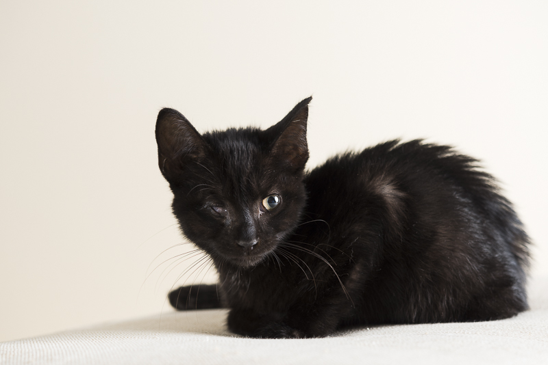 black kitten with one (working) eye, ©Alice G Patterson Photography | Syracuse lifestyle & studio pet photography