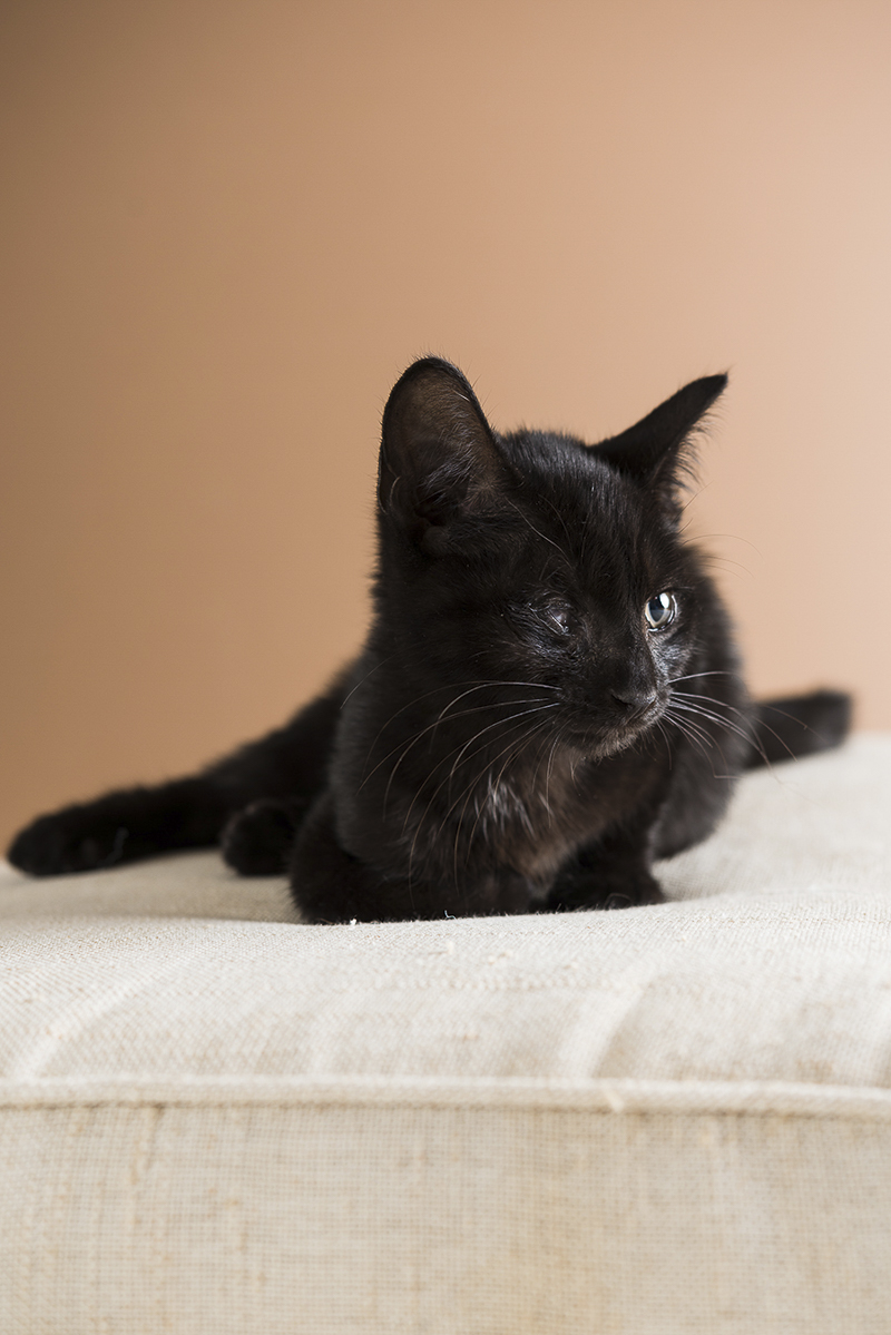 black kitten on white cushion, ©Alice G Patterson Photography | Syracuse lifestyle & studio pet photography