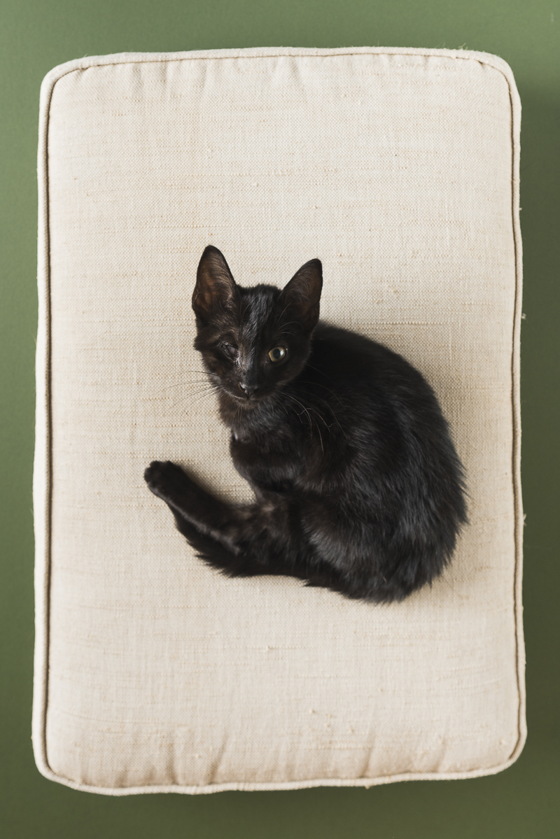 black kitten with special needs, ©Alice G Patterson Photography | Syracuse lifestyle & studio pet photography