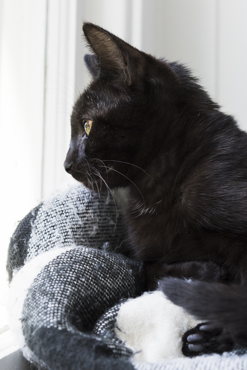 black kitten looking out window, | Alice G Patterson Photography, lifestyle pet photography