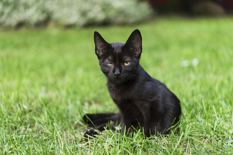 special needs kitten in the grass, ©Alice G Patterson Photography | Syracuse lifestyle & studio pet photography