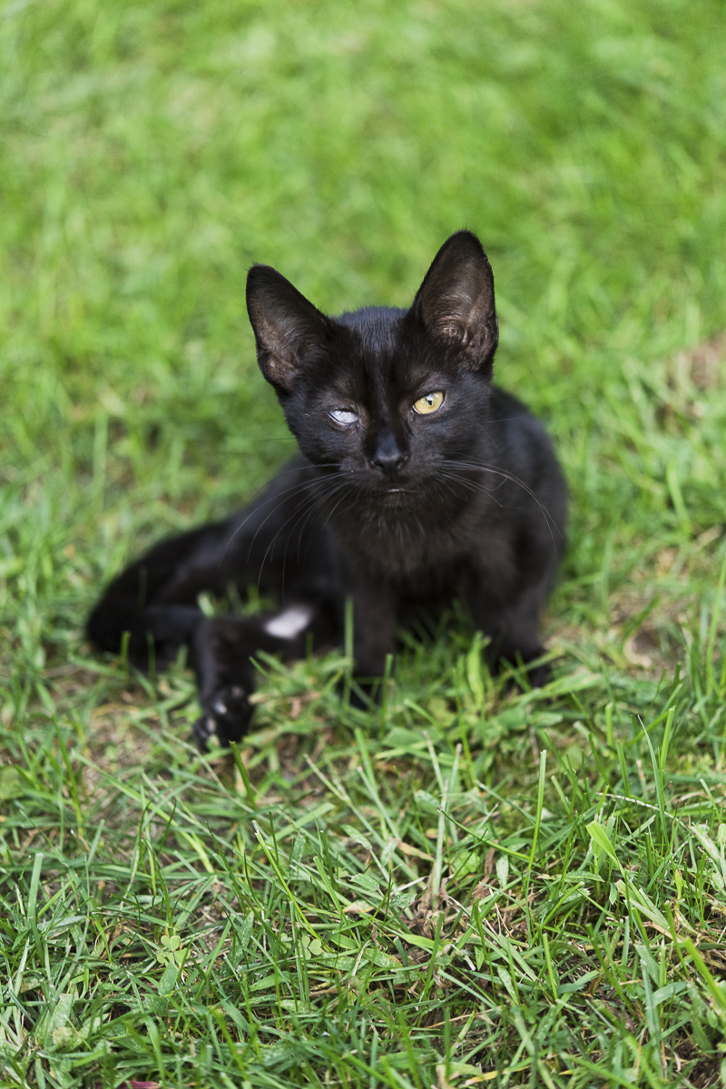 little black kitten with one good eye, Little Highway Kitty, ©Alice G Patterson Photography | Syracuse lifestyle cat photography