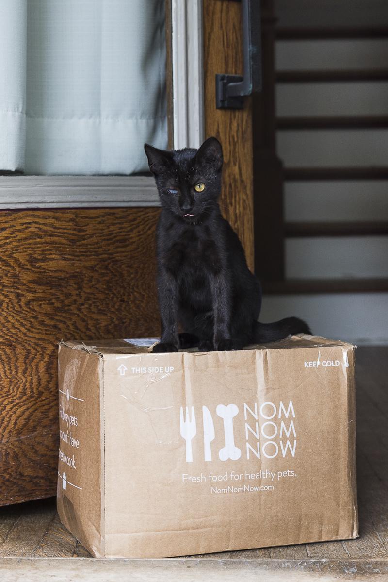 Little Highway Kitty sitting on NomNomNow box