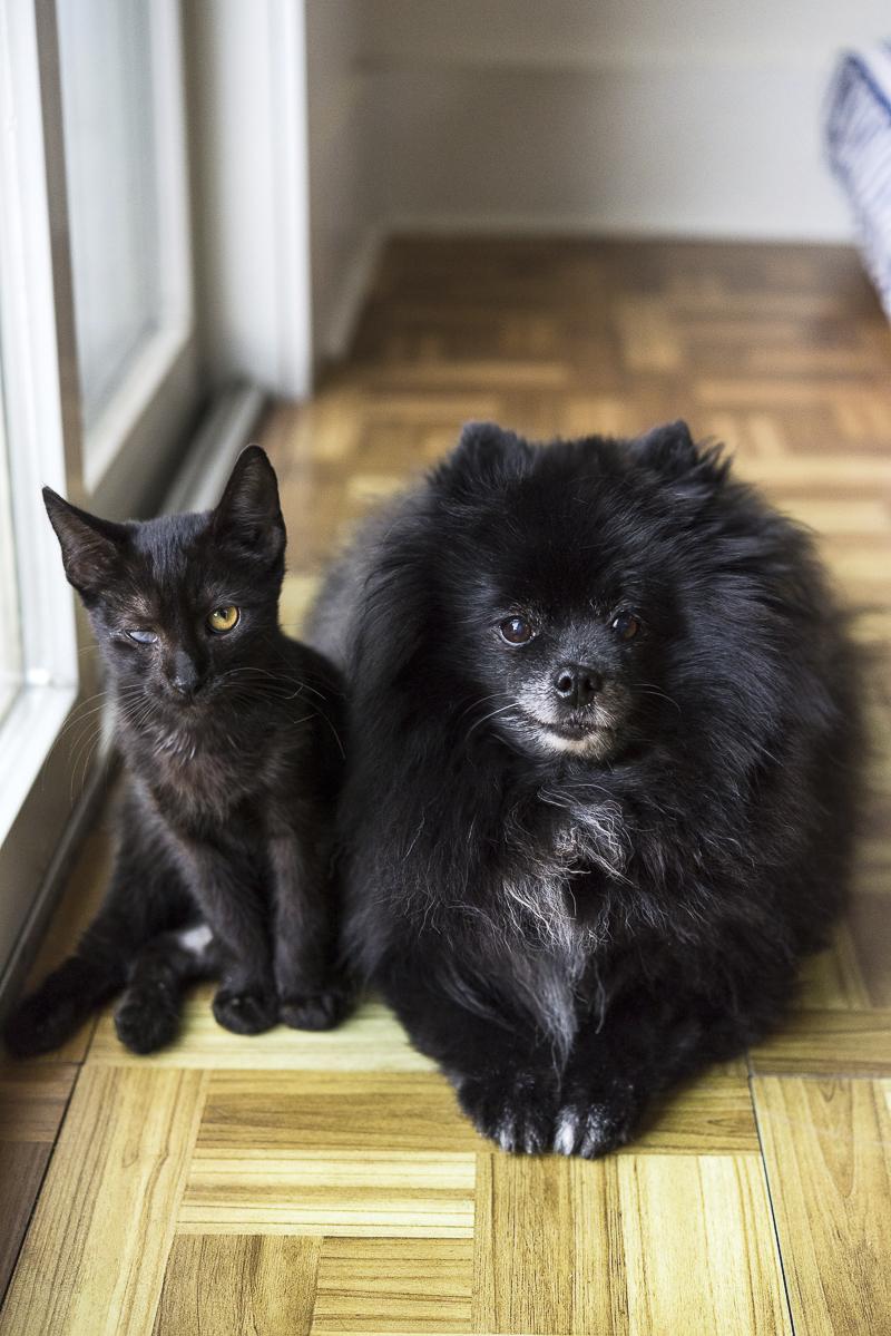 black kitten and black Pomeranian, besties, bffs ©Alice G Patterson Photography | Syracuse lifestyle & studio pet photography
