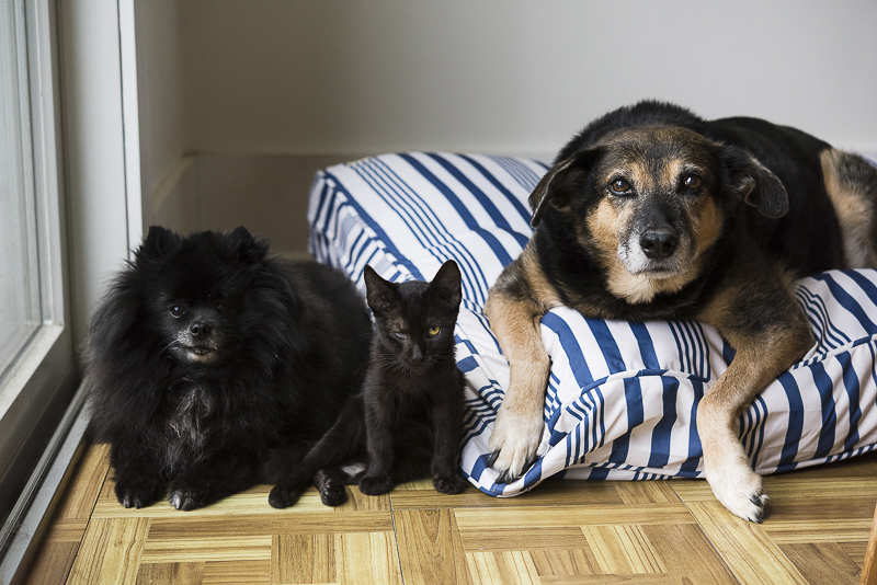 dogs and kitten waiting for treats, ©Alice G Patterson Photography | Syracuse lifestyle photographer