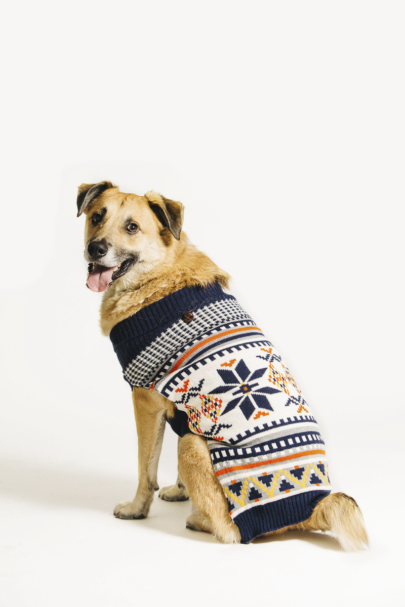 mixed breed in holiday sweater, Philly pet photographer, ©Alexa Nahas Photography