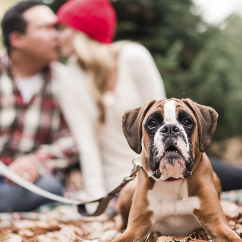 Happy Tails: McQueen the Boxer And Family