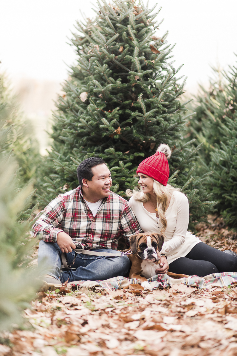 holiday photos of a Boxer and his family at Christmas tree farm | © Britney Clause Photography