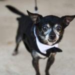 Best (Wedding) Dog: Mr. Snaggles
